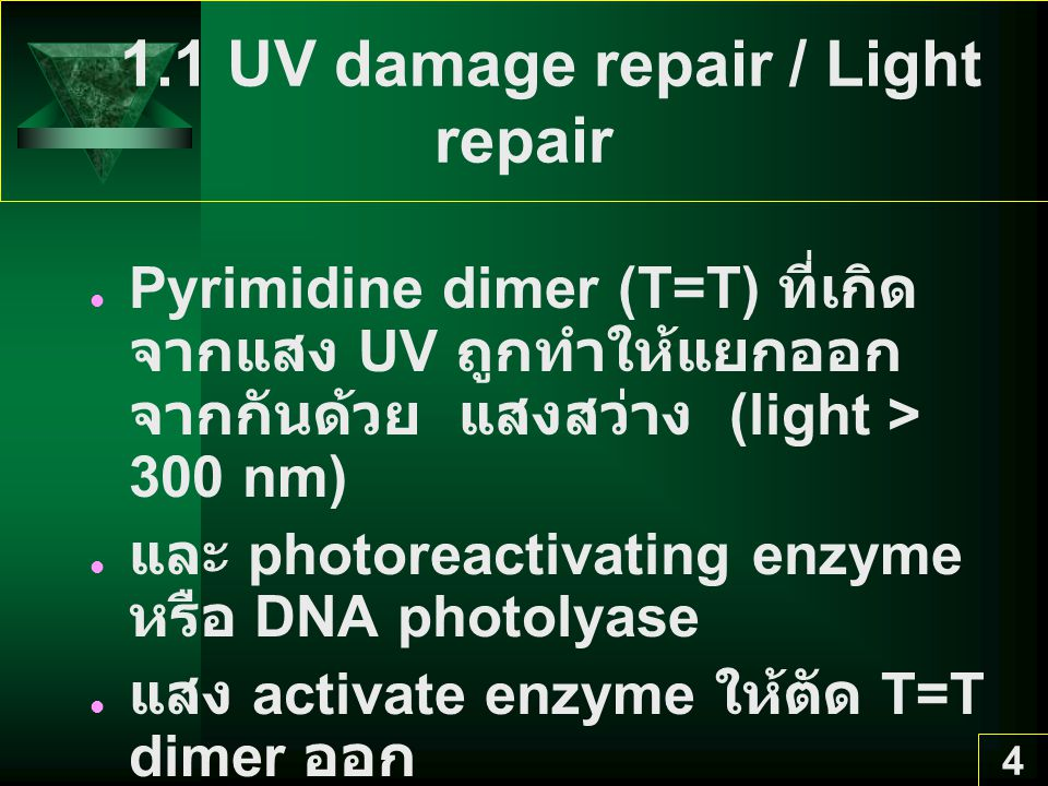 1.1 UV damage repair / Light repair