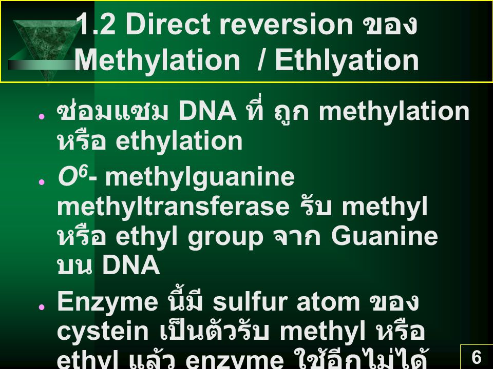 1.2 Direct reversion ของ Methylation / Ethlyation