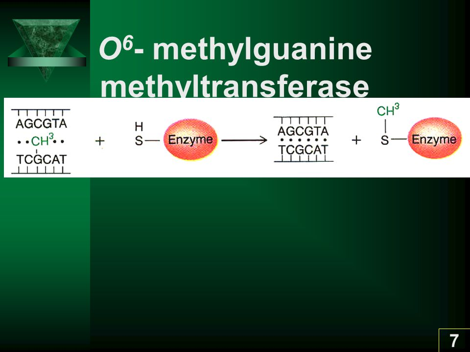 O6- methylguanine methyltransferase
