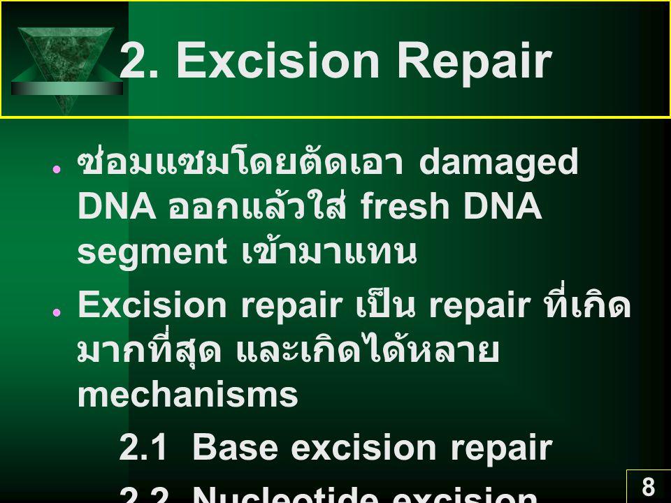 2. Excision Repair ซ่อมแซมโดยตัดเอา damaged DNA ออกแล้วใส่ fresh DNA segment เข้ามาแทน.