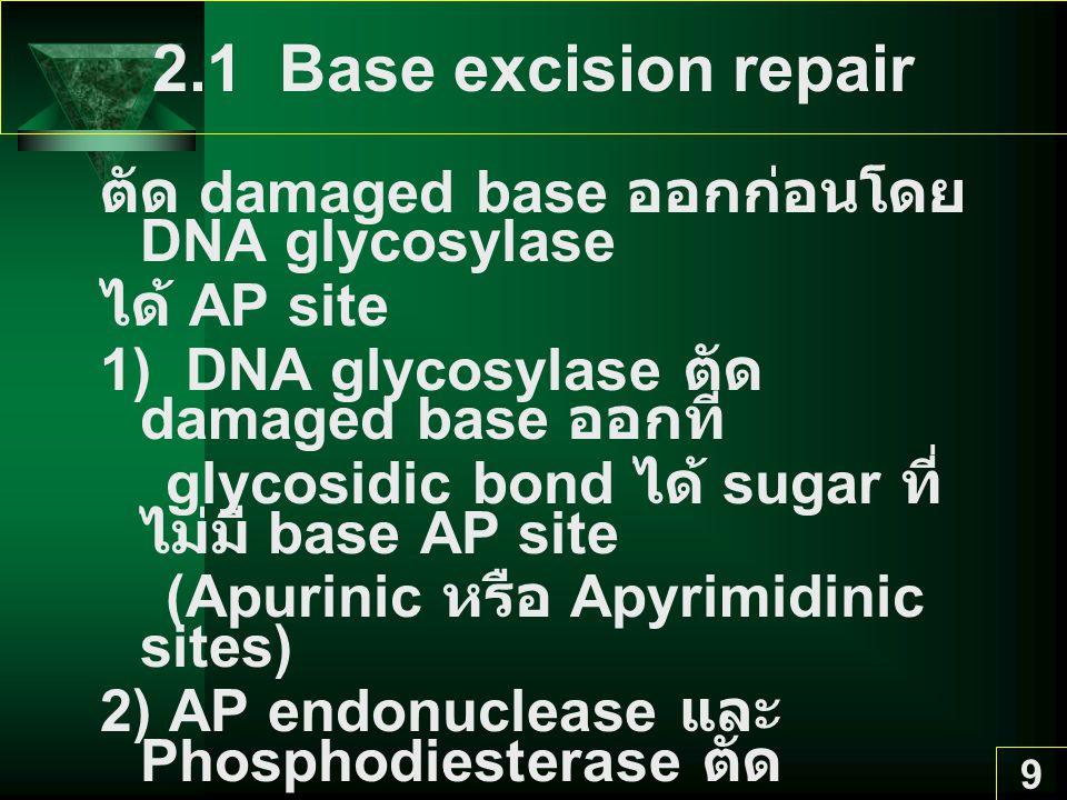 2.1 Base excision repair ตัด damaged base ออกก่อนโดย DNA glycosylase