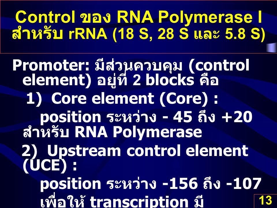 Control ของ RNA Polymerase I สำหรับ rRNA (18 S, 28 S และ 5.8 S)