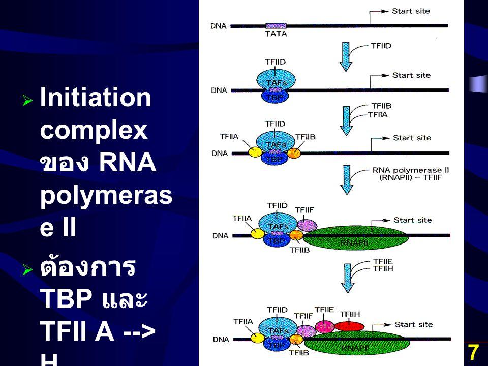 Initiation complex ของ RNA polymerase II