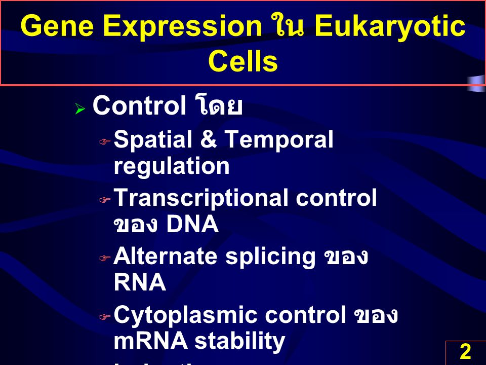 Gene Expression ใน Eukaryotic Cells