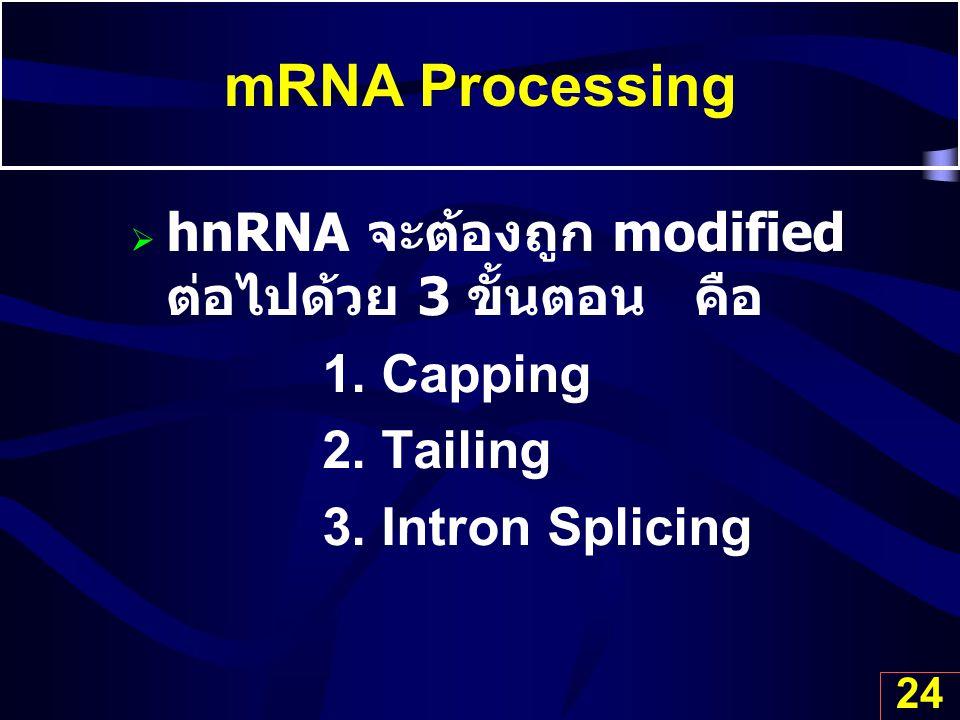 mRNA Processing hnRNA จะต้องถูก modified ต่อไปด้วย 3 ขั้นตอน คือ