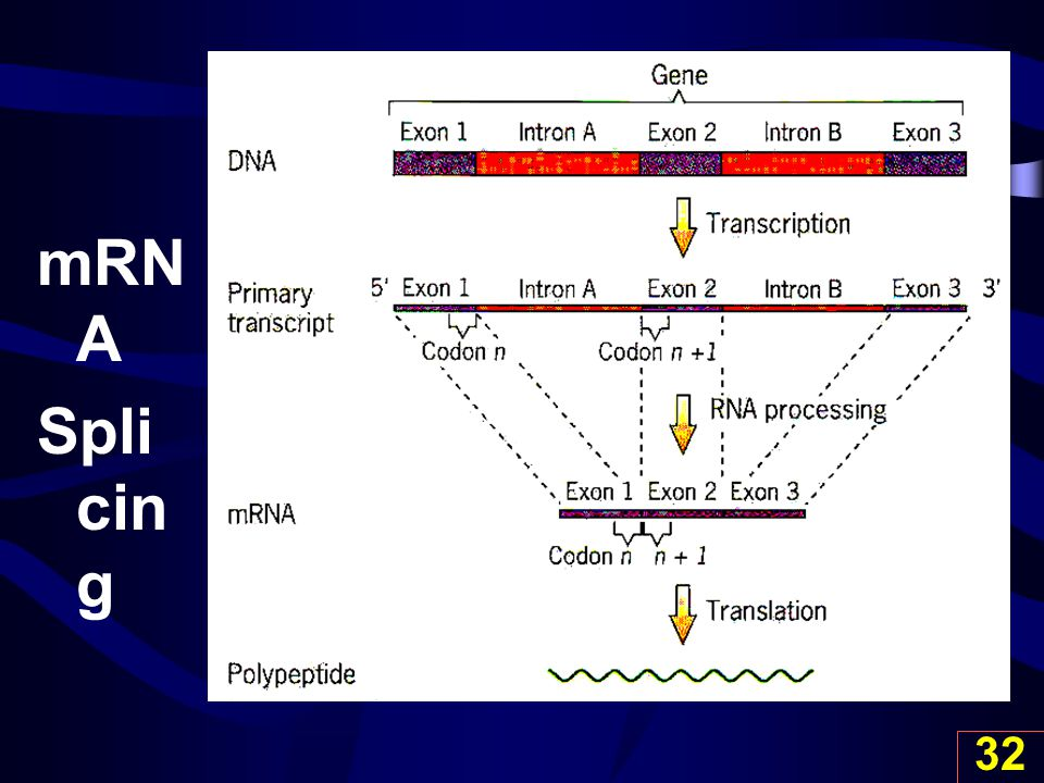 mRNA Splicing