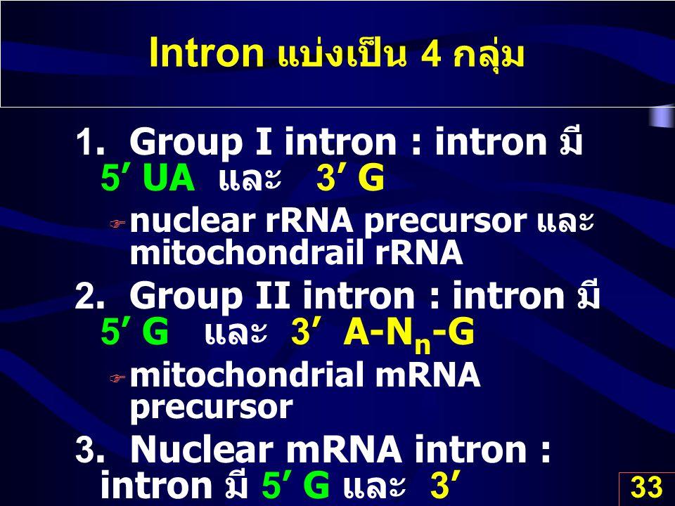 Intron แบ่งเป็น 4 กลุ่ม 1. Group I intron : intron มี 5' UA และ 3' G
