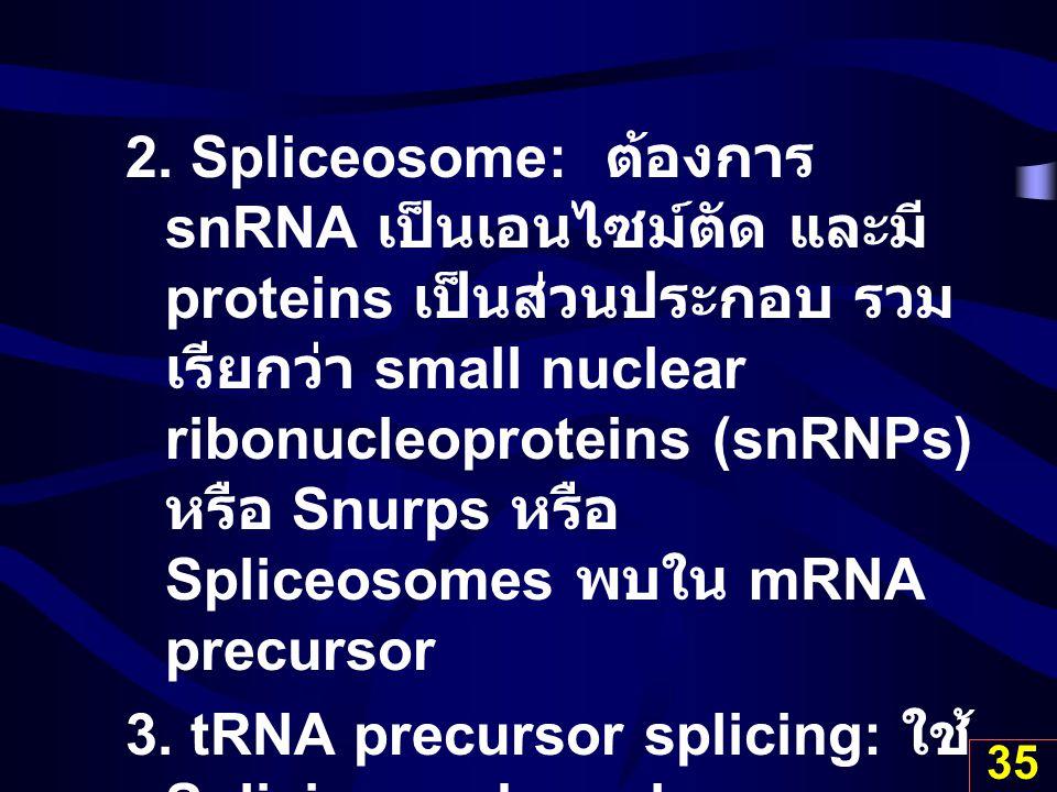 2. Spliceosome: ต้องการ snRNA เป็นเอนไซม์ตัด และมี proteins เป็นส่วนประกอบ รวมเรียกว่า small nuclear ribonucleoproteins (snRNPs) หรือ Snurps หรือ Spliceosomes พบใน mRNA precursor