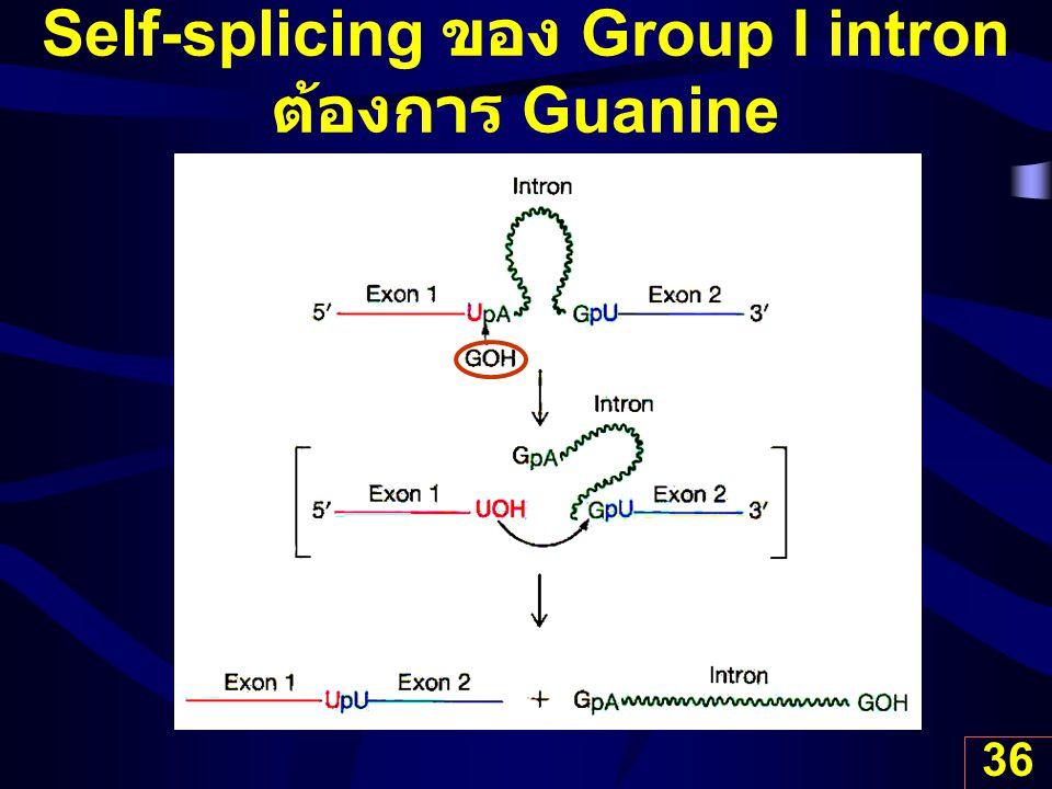 Self-splicing ของ Group I intron ต้องการ Guanine