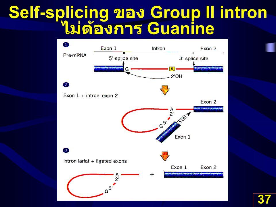 Self-splicing ของ Group II intron ไม่ต้องการ Guanine