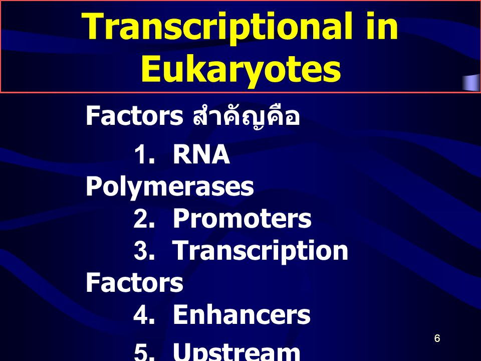 Transcriptional in Eukaryotes