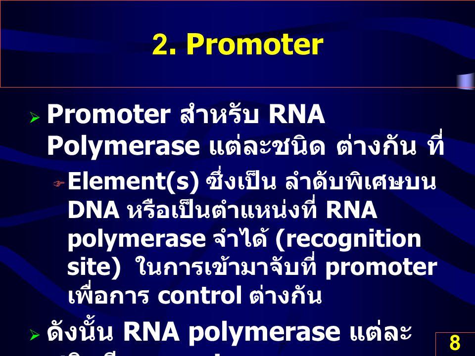 2. Promoter Promoter สำหรับ RNA Polymerase แต่ละชนิด ต่างกัน ที่
