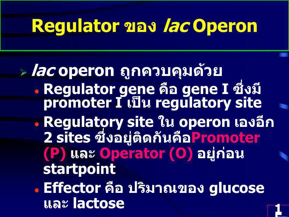 Regulator ของ lac Operon