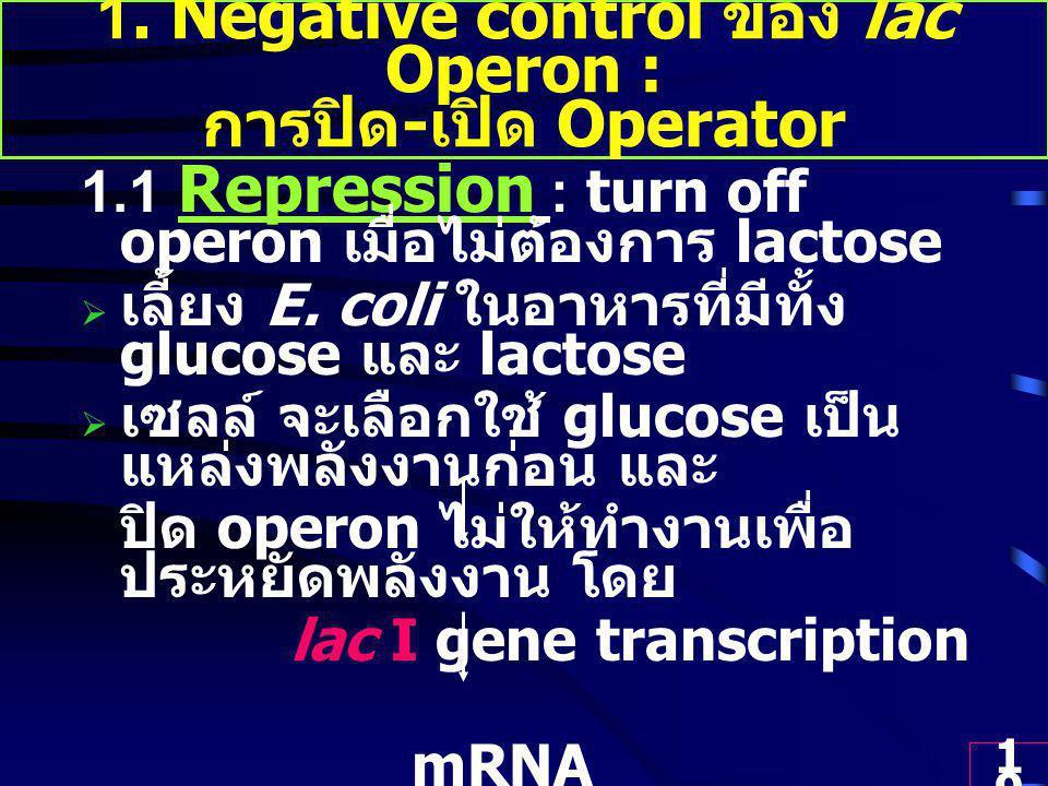 1. Negative control ของ lac Operon : การปิด-เปิด Operator