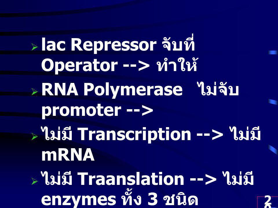 lac Repressor จับที่ Operator --> ทำให้