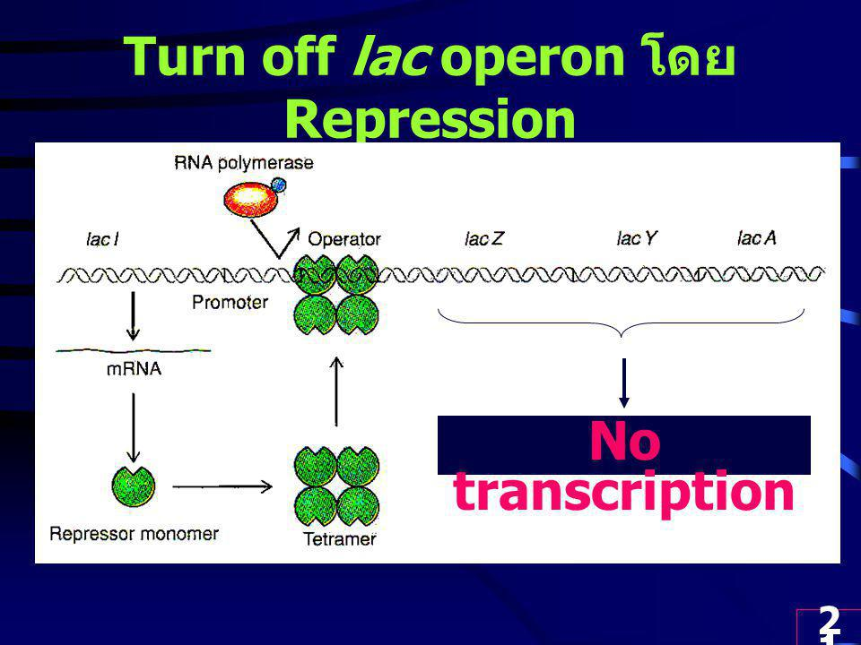 Turn off lac operon โดย Repression