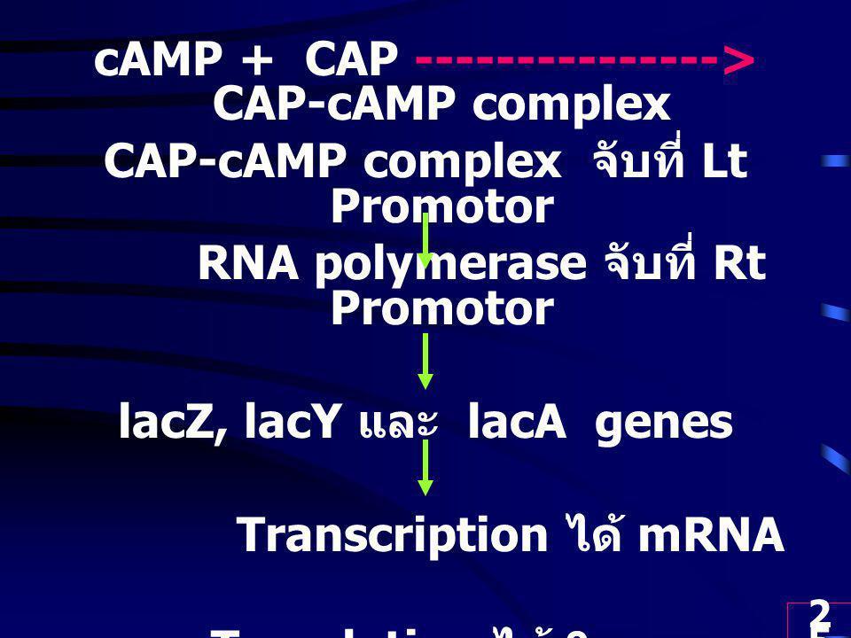 cAMP + CAP ---------------> CAP-cAMP complex