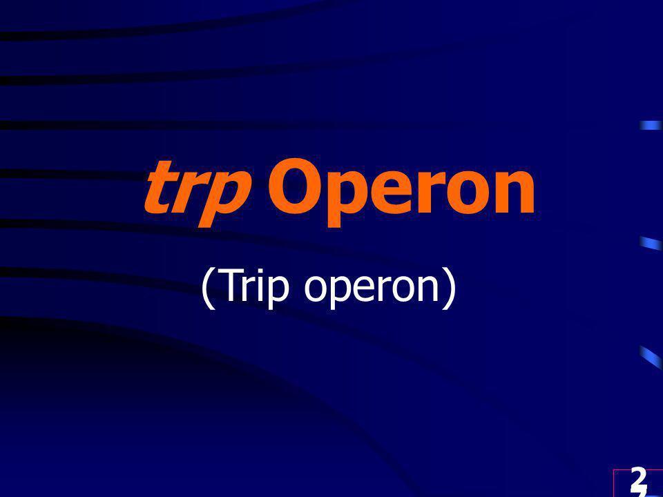 trp Operon (Trip operon)