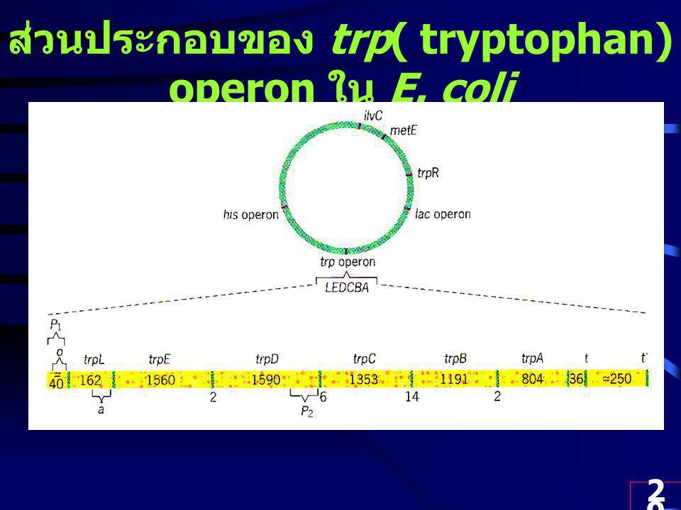 ส่วนประกอบของ trp( tryptophan) operon ใน E. coli