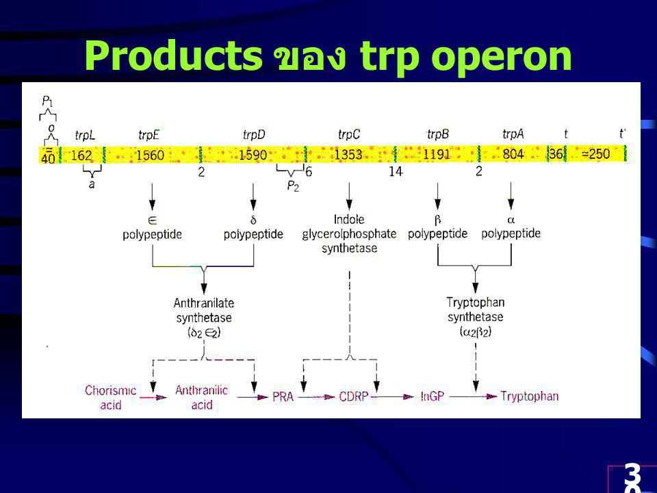 Products ของ trp operon