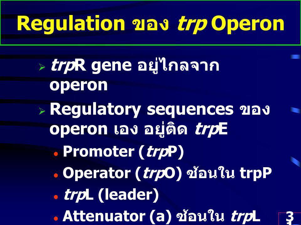 Regulation ของ trp Operon
