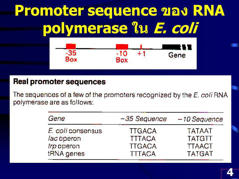 Promoter sequence ของ RNA polymerase ใน E. coli
