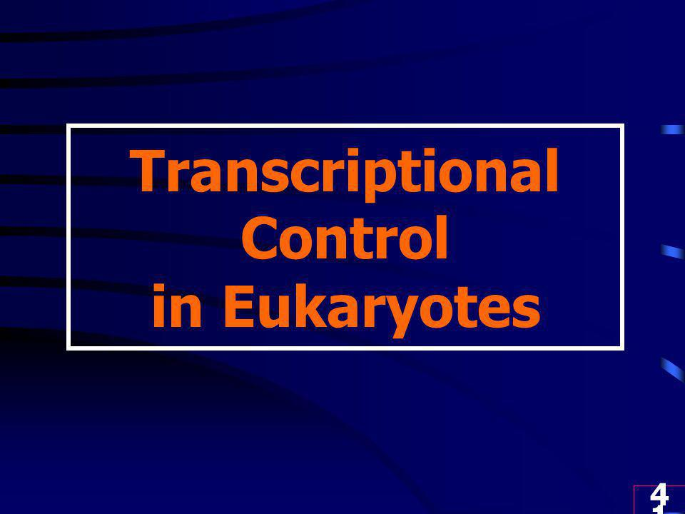 Transcriptional Control in Eukaryotes