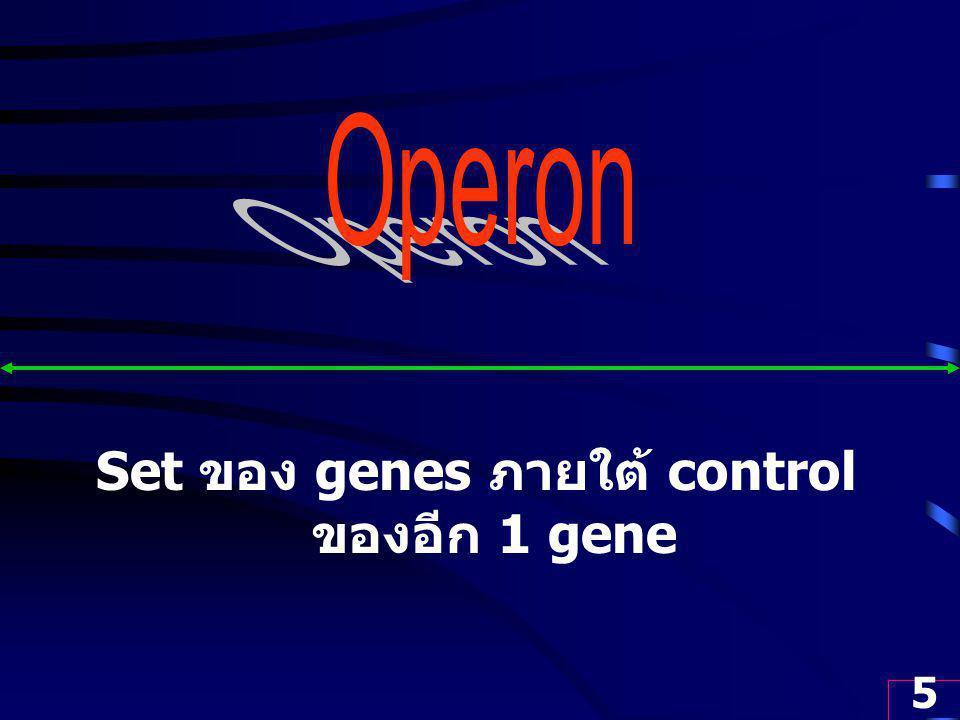 Set ของ genes ภายใต้ control ของอีก 1 gene