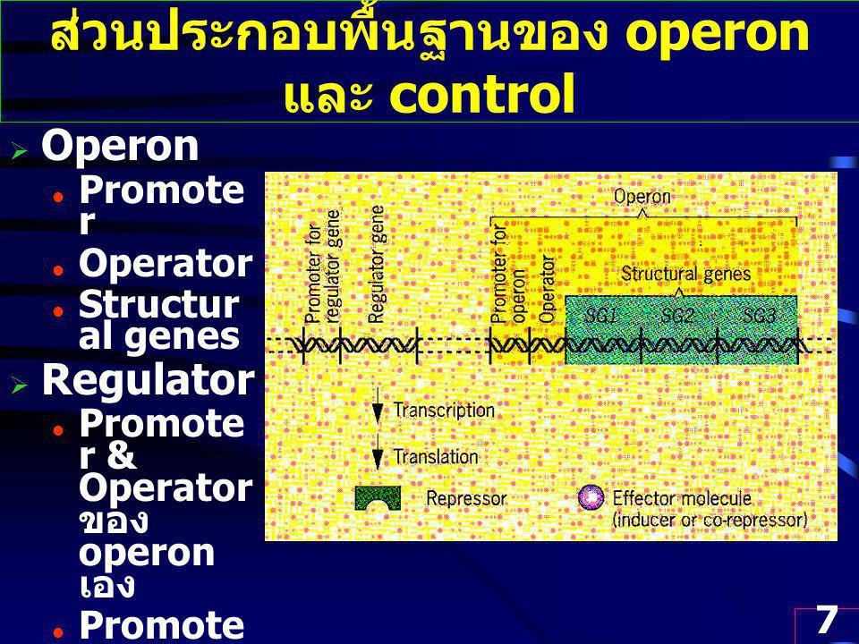 ส่วนประกอบพื้นฐานของ operon และ control