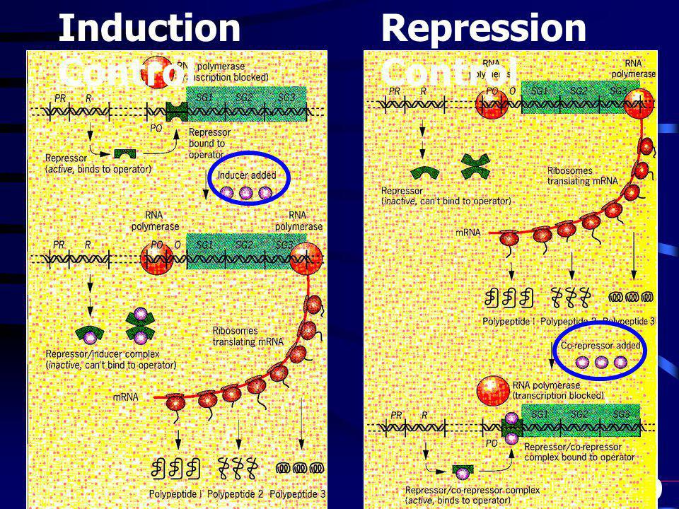Induction Control Repression Control