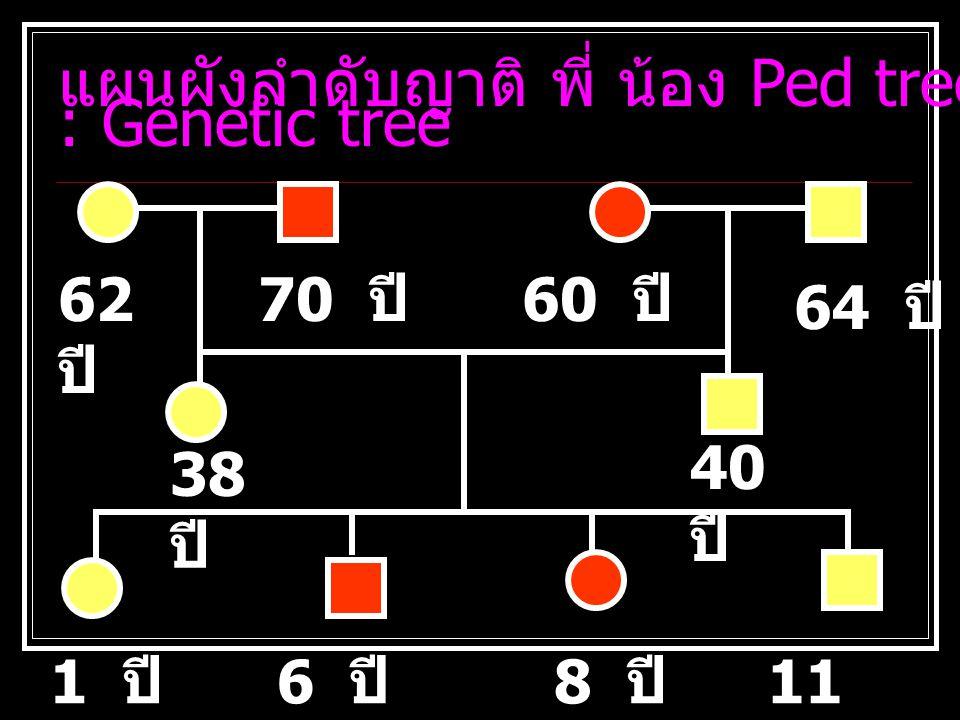 แผนผังลำดับญาติ พี่ น้อง Ped tree : Genetic tree