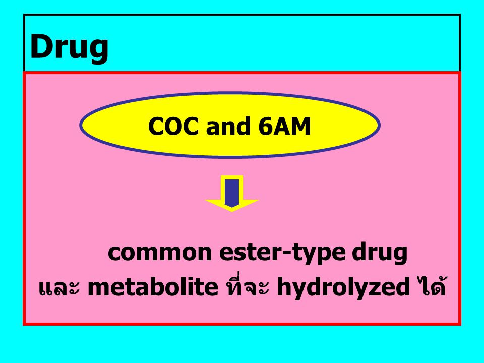 common ester-type drug และ metabolite ที่จะ hydrolyzed ได้