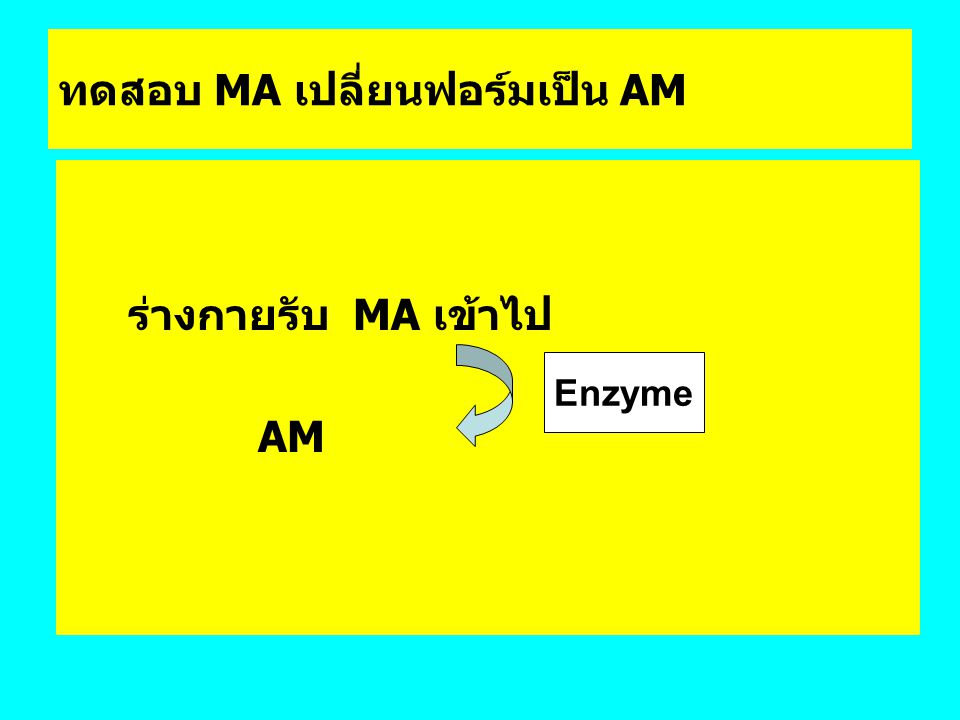 ทดสอบ MA เปลี่ยนฟอร์มเป็น AM