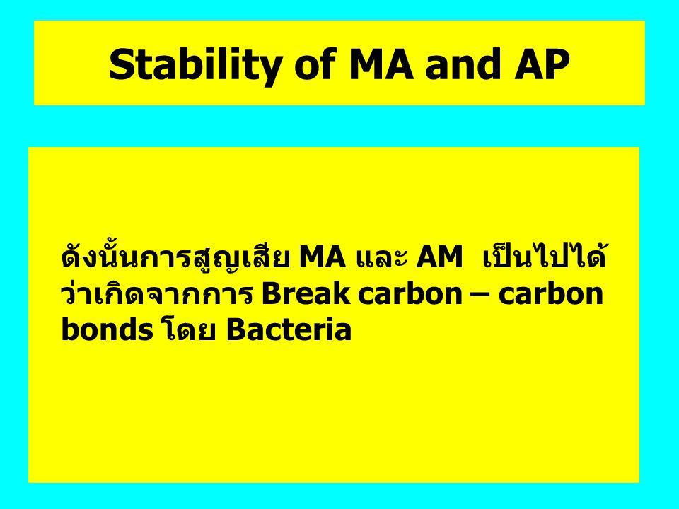 Stability of MA and AP ดังนั้นการสูญเสีย MA และ AM เป็นไปได้ว่าเกิดจากการ Break carbon – carbon bonds โดย Bacteria.