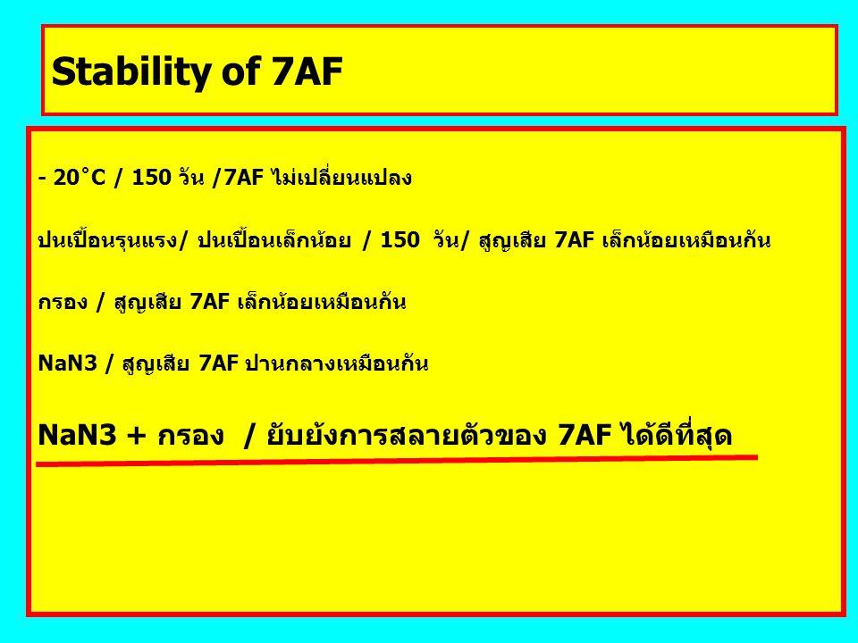 Stability of 7AF NaN3 + กรอง / ยับย้งการสลายตัวของ 7AF ได้ดีที่สุด