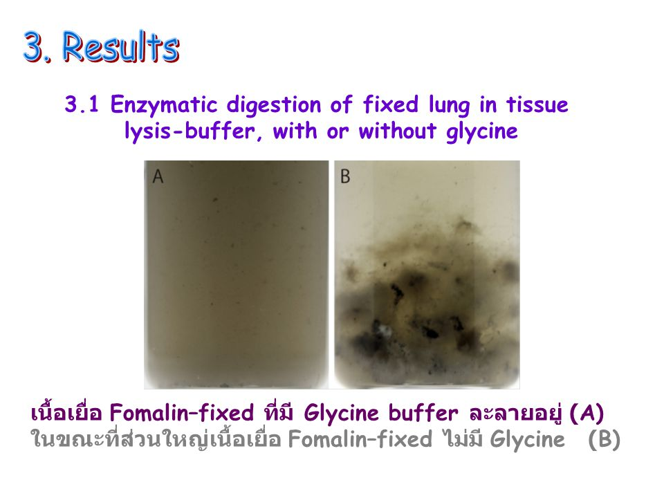 3. Results 3.1 Enzymatic digestion of fixed lung in tissue