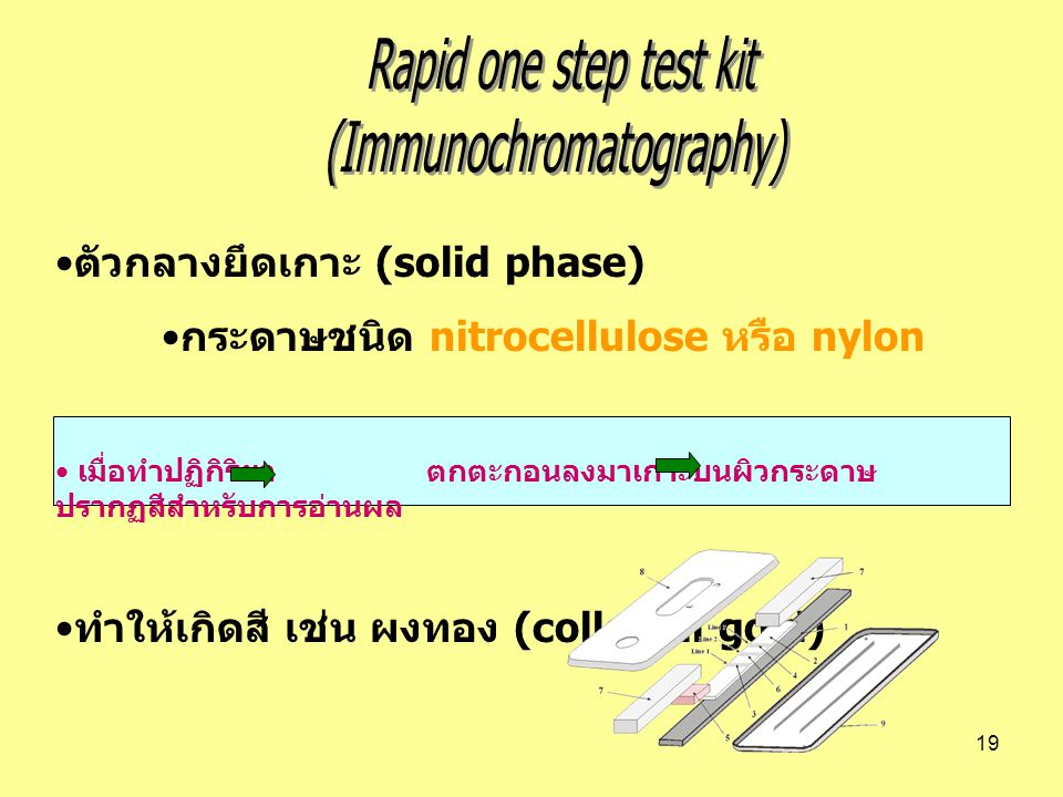 (Immunochromatography)