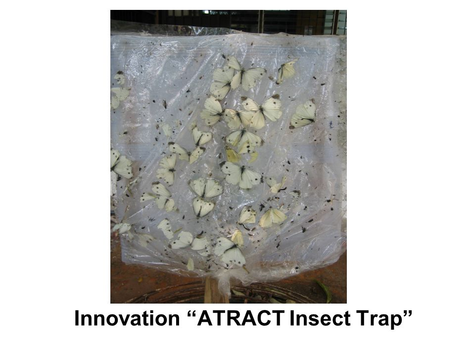Innovation ATRACT Insect Trap