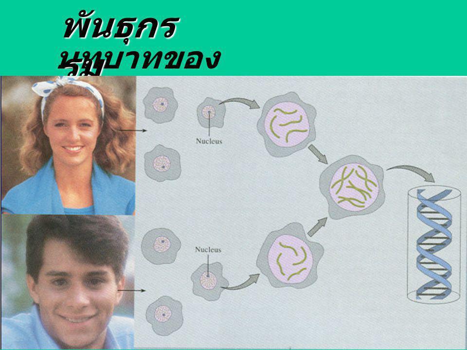 พันธุกรรม บทบาทของ genes