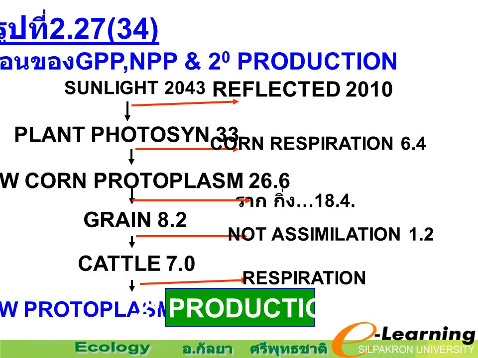 ขั้นตอนของGPP,NPP & 20 PRODUCTION NEW PROTOPLASM(CATTLE) 1.2