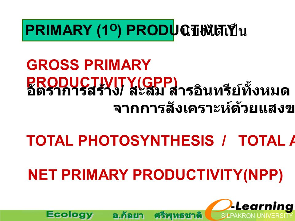 PRIMARY (1O) PRODUCTIVITY