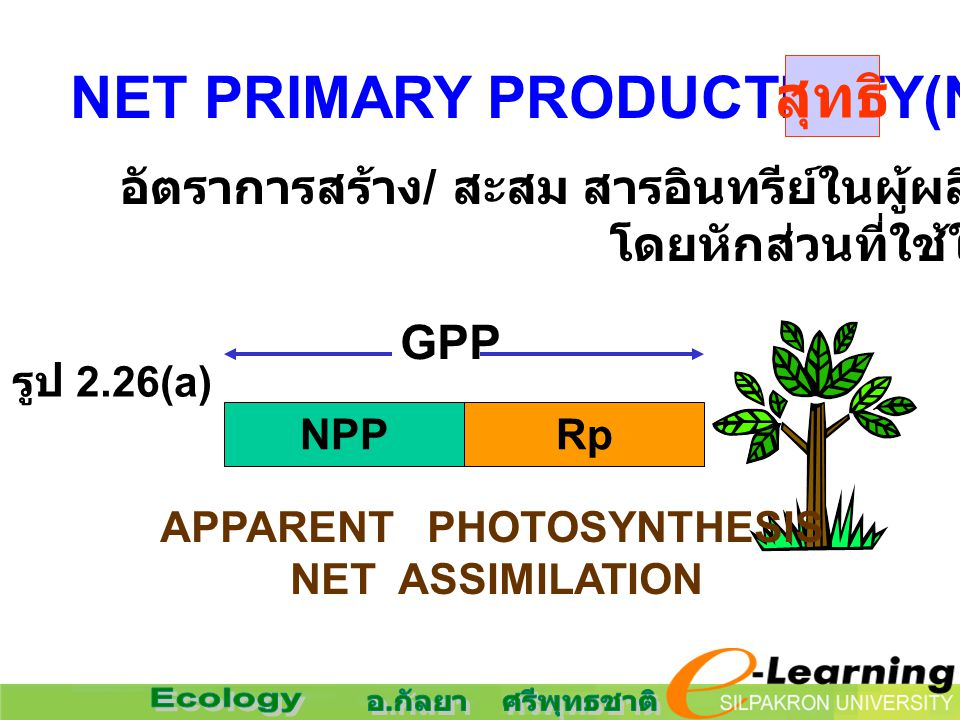 NET PRIMARY PRODUCTIVITY(NPP) สุทธิ