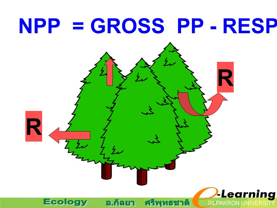NPP = GROSS PP - RESPIRATION