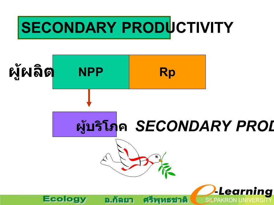 SECONDARY PRODUCTIVITY