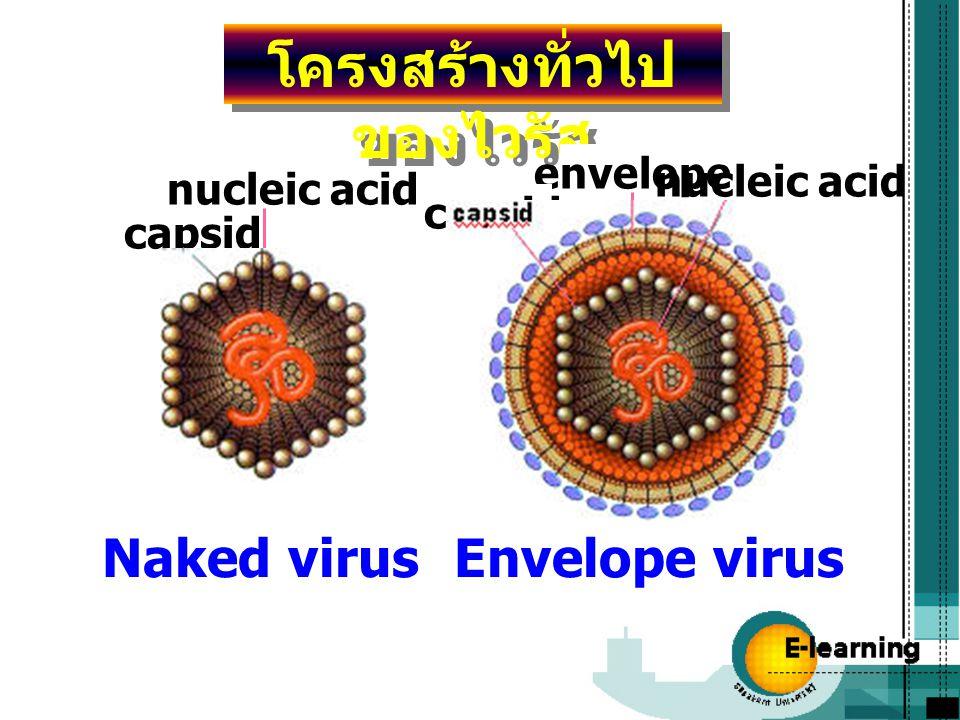 โครงสร้างทั่วไปของไวรัส