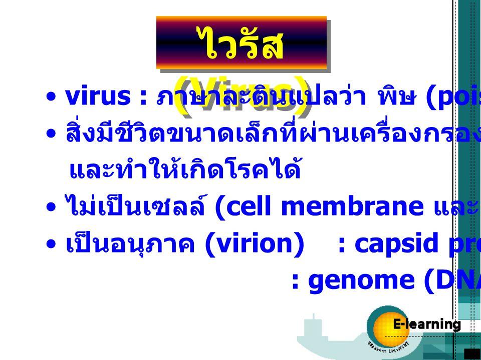ไวรัส (Virus) virus : ภาษาละตินแปลว่า พิษ (poison)