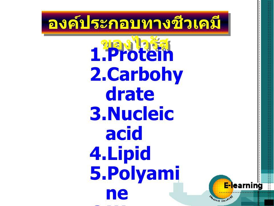 องค์ประกอบทางชีวเคมีของไวรัส