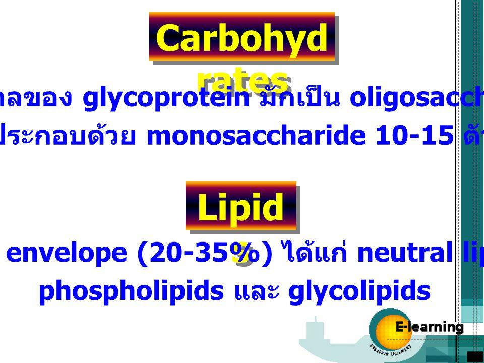 Carbohydrates ส่วนน้ำตาลของ glycoprotein มักเป็น oligosaccharides. ที่ประกอบด้วย monosaccharide 10-15 ตัว.