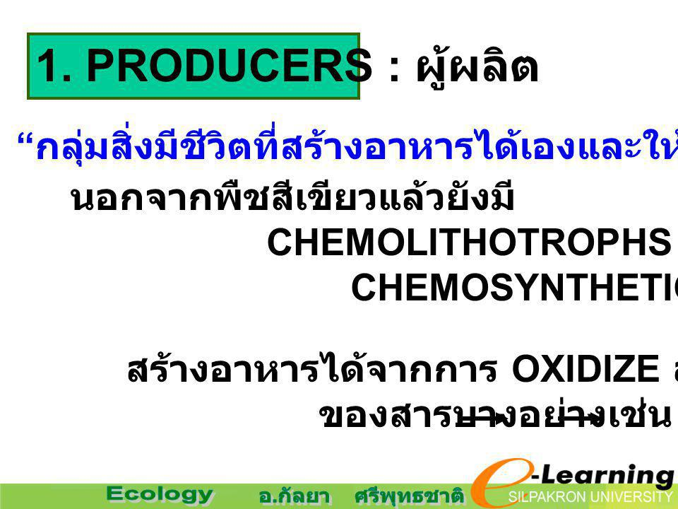 1. PRODUCERS : ผู้ผลิต กลุ่มสิ่งมีชีวิตที่สร้างอาหารได้เองและให้อาหารแก่สิ่งมีชีวิตอื่น ๆ นอกจากพืชสีเขียวแล้วยังมี