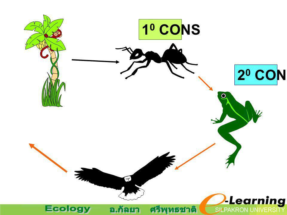 10 CONS 20 CONS